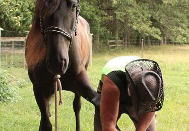 The importance of horse shoes